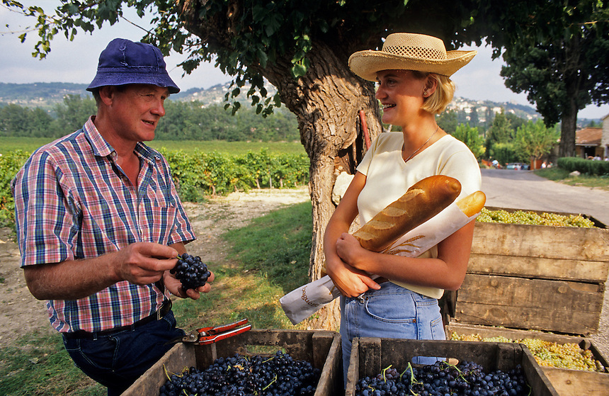 France. Provence. Farmer talking about his grape harvest to young visitor..