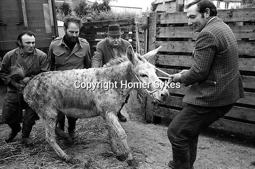 Hatherleigh Devon England 1973. Mule to annual horse sale November.