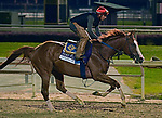 October 31, 2018 : Catalina Cruiser, trained by John Sadler, gallops in preparation for the Breeders' Cup  Dirt Mile at Churchill Downs on October 31, 2018 in Louisville, KY. Jessica Morgan/ESW/CSM