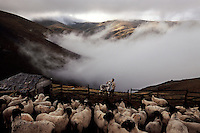 Morning fog rises from valleys into the  mountains north of Kadirga.<br /> A mute shepherd tends his livestock. His family is from the Agasar area.  Members of an Oguz tribe returned to the Black Sea from Asia Minor 900 years ago.