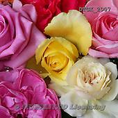 Gisela, FLOWERS, BLUMEN, FLORES, photos+++++,DTGK2007,#f#
