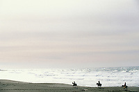 California, Bodega Bay, Horseback riding on the beach, Bodega Dunes