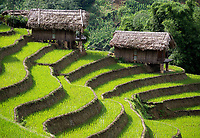Sapa Rice Terraces and Agriculture, Vietnam