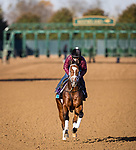 Mutasaabeq, trained by Todd A. Pletcher, exercises in preparation for the Breeders' Cup Juvenile Turf at Keeneland 11.03.20.