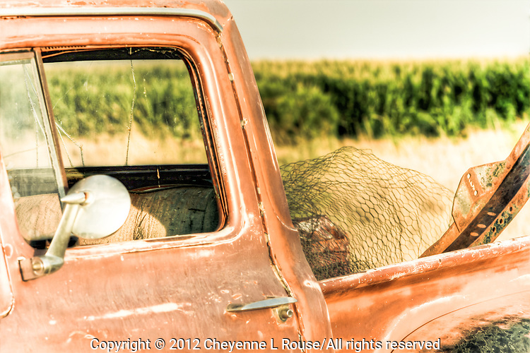 Ford Truck and chicken wire in Arizona