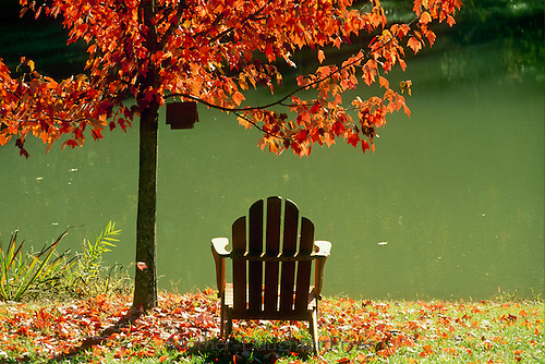 Adirondack chair sits beside lake beneath brightly colored maple tree on warm fall afternoon.