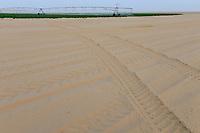 EGYPT, Farafra, potato farming in the desert, pivot circle irrigation at United Farms, the fossile groundwater from the Nubian Sandstone Aquifer is pumped from 1000 metres deep wells  / AEGYPTEN, Farafra, United Farms, Kartoffelanbau in der Wueste, die kreisrunden Felder werden mit Pivot Kreisbewaesserungsanlagen mit fossilem Grundwasser des Nubischer Sandstein-Aquifer aus 1000 Meter tiefen Brunnen bewaessert