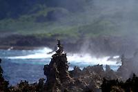 The Blowholes, Christmas Island, Indian Ocean