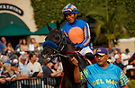 DEL MAR, CA  JULY 31: #7 Eight Rings, ridden by Abel Cedillo, in the paddock before the Bing Crosby Stakes (Grade l) Breeders Cup Win and You're In Sprint Division on July 31, 2021 at Del Mar Thoroughbred Club in Del Mar, CA. (Photo by Casey Phillips/Eclipse lSportswire/CSM)