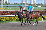 14 February 2010: Datte Echo with Eddie castro in the Coconut Grove Stakes at Gulfstream Park in Hallandale Beach, FL.