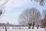 Europa, DEU, Deutschland, Nordrhein Westfalen, NRW, Rheinland, Niederrhein, Alpen-Menzelen, Schnee, Winter, Baeume, Typische Kopfweiden, Kategorien und Themen, Natur, Umwelt, Landschaft, Jahreszeiten, Stimmungen, Landschaftsfotografie, Landschaften, Landschaftsphoto, Landschaftsphotographie, Wetter, Wetterelemente, Wetterlage, Wetterkunde, Witterung, Witterungsbedingungen, Wettererscheinungen, Meteorologie, Wettervorhersage<br /> <br /> [Fuer die Nutzung gelten die jeweils gueltigen Allgemeinen Liefer-und Geschaeftsbedingungen. Nutzung nur gegen Verwendungsmeldung und Nachweis. Download der AGB unter http://www.image-box.com oder werden auf Anfrage zugesendet. Freigabe ist vorher erforderlich. Jede Nutzung des Fotos ist honorarpflichtig gemaess derzeit gueltiger MFM Liste - Kontakt, Uwe Schmid-Fotografie, Duisburg, Tel. (+49).2065.677997, <br /> archiv@image-box.com, www.image-box.com]