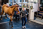 Arrival of the horses to Hong Kong ahead of the Longines HK Masters 2015 at the Hong Kong International Airport on 09 February 2015 in Hong Kong, China. Photo by Xaume Olleros / Power Sport Images