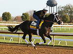 Title Ready, trained by trainer Dallas Stewart, exercises in preparation for the Breeders' Cup Classic at Keeneland Racetrack in Lexington, Kentucky on November 5, 2020.