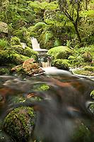 Pristine forest stream in Oparara Valley, Kahurangi National Park, West Coast, Buller Region, New Zealand