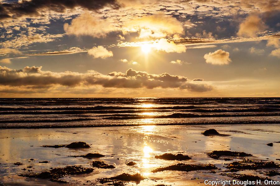 Kelp washes ashore under pending storm clouds at dusk along Grayland Beach, Washington.  Grayland Beach Stae Park.