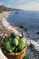 - Calabria, Cedar Coast, Diamante beach towards South, basket of cedars<br />