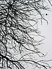 bare branches in fall<br /> <br /> ramas peladas en otoño<br /> <br /> kahle Äste im Herbst<br /> <br /> 2272 x 1704 px<br /> 150 dpi: 38,47 x 28,85 cm<br /> 300 dpi: 19,24 x 14,43 cm