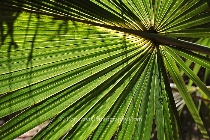 Palm Fronds 3