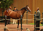 12 September 2010.  Hip #47 Storm Cat - Halo America colt sold for $320,000 at the Keeneland September Yearling Sale.   This is one of the last three progeny for the great stallion, Storm Cat.