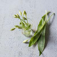Gastronomie Générale: Ail des ours - Stylisme : Valérie LHOMME // Gastronomy:  Allium ursinum,  (food stylist Valerie LHOMME)