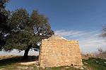 T-029 Kermes Oak in Samaria