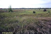 BS02-001b  Alton peat bog