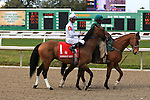 NEW ORLEANS, LA - FEBRUARY 20:<br /> Majestic Harbor #1, ridden by Corey J Lanerie in the post parade for the Mineshaft Handicap Stakes in the Louisiana Derby Preview Race Day at Fairgrounds Race Course on February 20,2016 in New Orleans, Louisiana. (Photo by Steve Dalmado/Eclipse Sportswire/Getty Images)