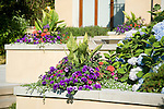 sunny summer detail close-up image of colorful summer annuals spilling out of interesting raised planter boxes built in to a stucco wall that terraces down the back yard of a European-style estate house