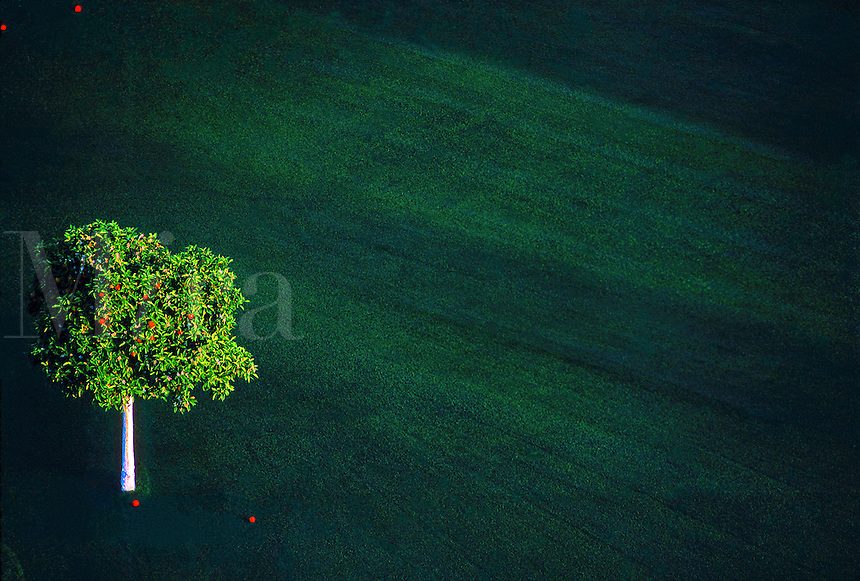 Orange tree and grass. Arizona.