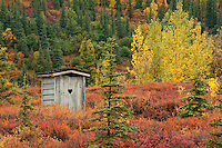 Alaska outhouse in the backcountry of Denali National Park during the vibrant fall foliage of late August, early September. Alaska, USA