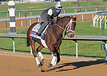 November 4, 2020: Speech, trained by trainer Michael W. McCarthy, exercises in preparation for the Breeders' Cup Filly & Mare Sprint at Keeneland Racetrack in Lexington, Kentucky on November 4, 2020. Jessica Morgan/Eclipse Sportswire/Breeders Cup