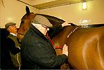 Royal Mews, Buckingham Palace, the royal vet checking over a horse in the stable block 1991 1990s London UK