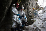 Researchers, including Vermont Fish and Wildlife biologist Scott Darling, look at one of the thousands of dead bats littering the entrance to Aeolus Cave. Bennington County, Vermont. March.