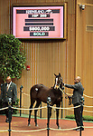 Hip 280 War Front - Questress colt consigned by Eaton sales, sold for $800,000.   November 7,2012.