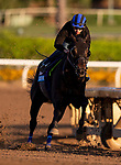 OCT 27: Breeders' Cup Juvenile  entrant Eight Rings, trained by Bob Baffert, works at Santa Anita Park in Arcadia, California on Oct 27, 2019. Evers/Eclipse Sportswire/Breeders' Cup