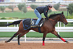 RIYADH, SA February 19 2021: HOMERYAN (USA) Track work from King Abddulaziz Racetrack, Riyadh, Saudi Arabia. Shamela Hanley/Eclipse Sportswire/CSM