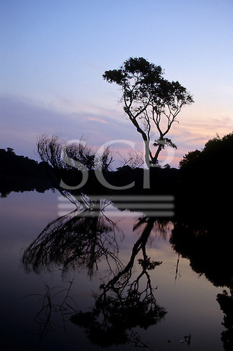 Anavilhanas, Amazon, Brazil. Sunset; trees and bushes silhouetted against the sky and reflected in the river.