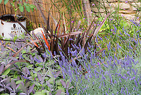 Cottage garden style plantings with Phormium, herb English lavender Lavandula angustifolia, culinary sage Salvia officinalis 'Purpurascens', ornamental onions Allium, stone wall, old rusting rustic bread pail ornament, fence, lush and rambling flowers and foliage plants together