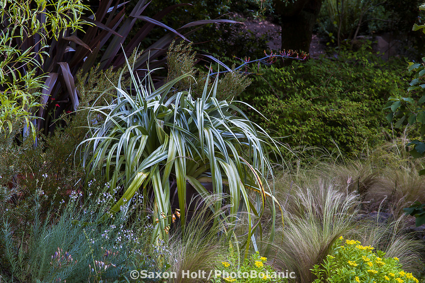 l-r Phormium 'Black Adder', Astelia 'Silver Shadow', Nassella tenuissima (Mexican Feather Grass), Sedum kamtschaticum (Stonecrop) at Elisabeth Miller Botanical Garden