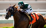 AUG 22: Chaos Theory, winner of the Grade III Green Flash Handicap with Umberto Rispoli aboard, in Del Mar, California on August 22, 2020. Evers/Eclipse Sportswire/CSM