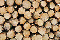 Pile of wood logs cut ready for laoding.