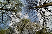 GERMANY, Plau, forest / DEUTSCHLAND, Plau, Wald, Erle und Weide