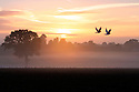 01/09/16<br /> <br /> As the sun rises over misty fields near Sudbury, Derbyshire, a pair of white doves take to the sky on the first day of autumn.<br /> All Rights Reserved, F Stop Press Ltd. +44 (0)1773 550665