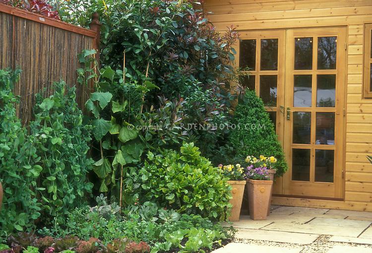 Pretty Vegetable Garden next to house door along fence, with pea trellises, lettuce, patio, shrubs