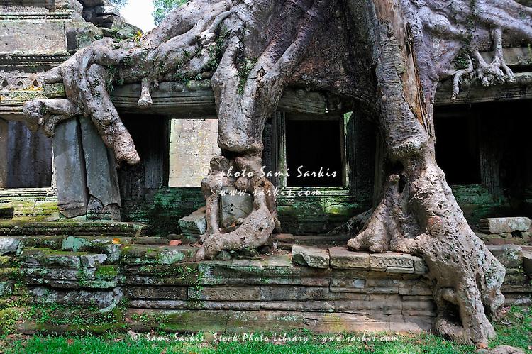 Strangler fig (Ficus sp. ) tree roots on Preah Khan Temple, Angkor Wat, Cambodia