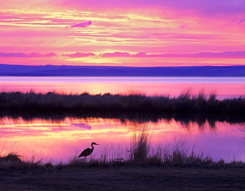 Sunrise on small pond at Summer Lake Inn with iron heron. Oregon