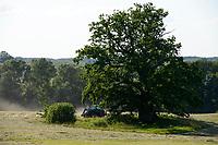 GERMANY, Teterow, forest / DEUTSCHLAND, Burg Schlitz, Landschaftsschutzgebiet Saechsische Schweiz, intakter Wald, Laubwald