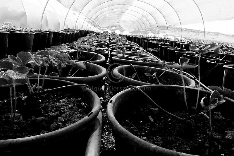 Green houses of the Jewish settlement of Susyah, in the West Bank. Amnesty International has accused Israel of denying Palestinians adequate access to water while allowing Jewish settlers in the occupied West Bank almost unlimited supplies. Photo by Quique Kierszenbaum