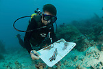 Katharina Fabricius collecting octo corals