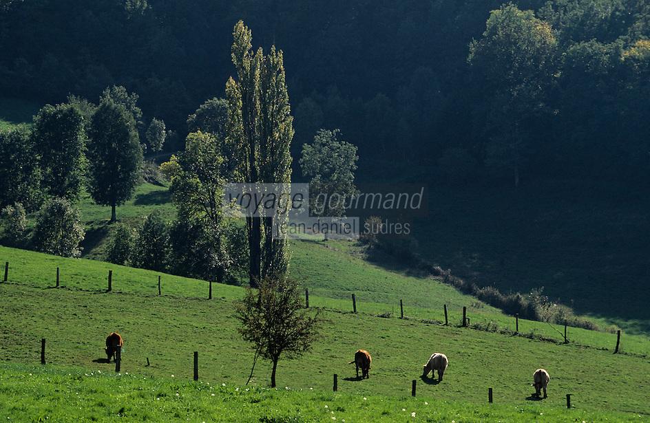 Europe/France/Auvergne/12/Aveyron/Env. de Marcillac: Pâturages